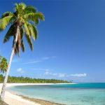 tonga-haapai-blueskies-coconut-tree