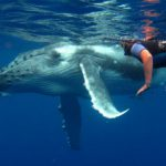 Whale Watching & Swimming Tour